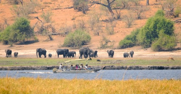 Cruising on the Chobe River, including picnic lunch