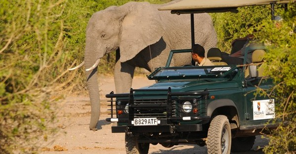 Game drives into Chobe National Park